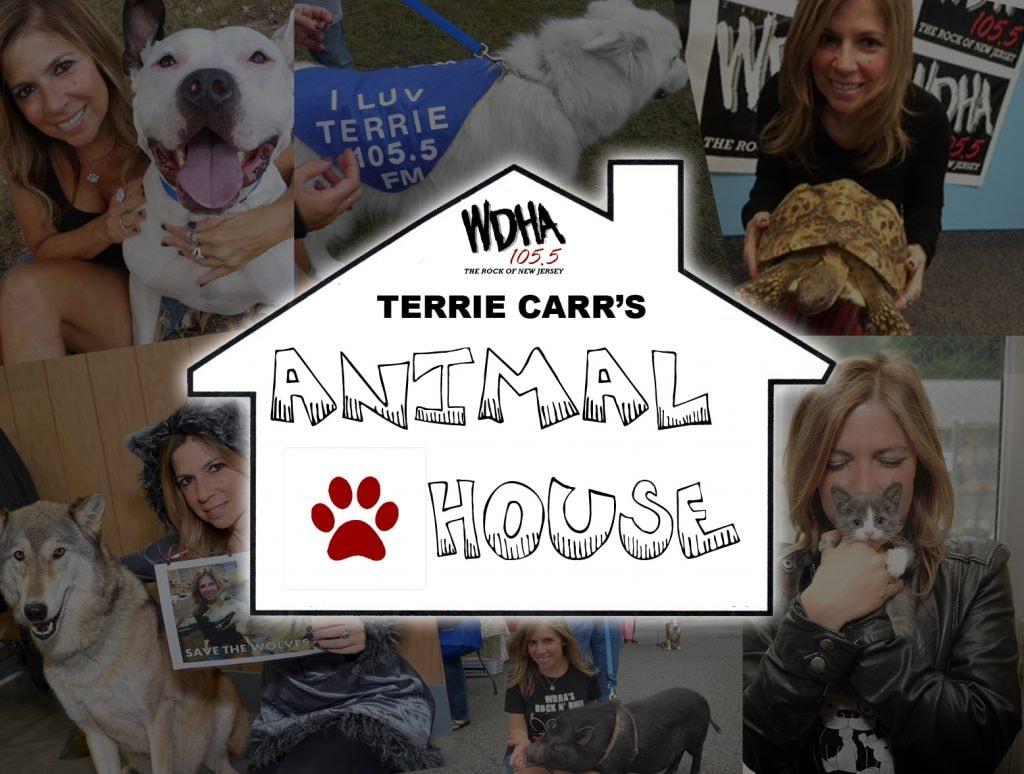 Terrie Carr's Animal House